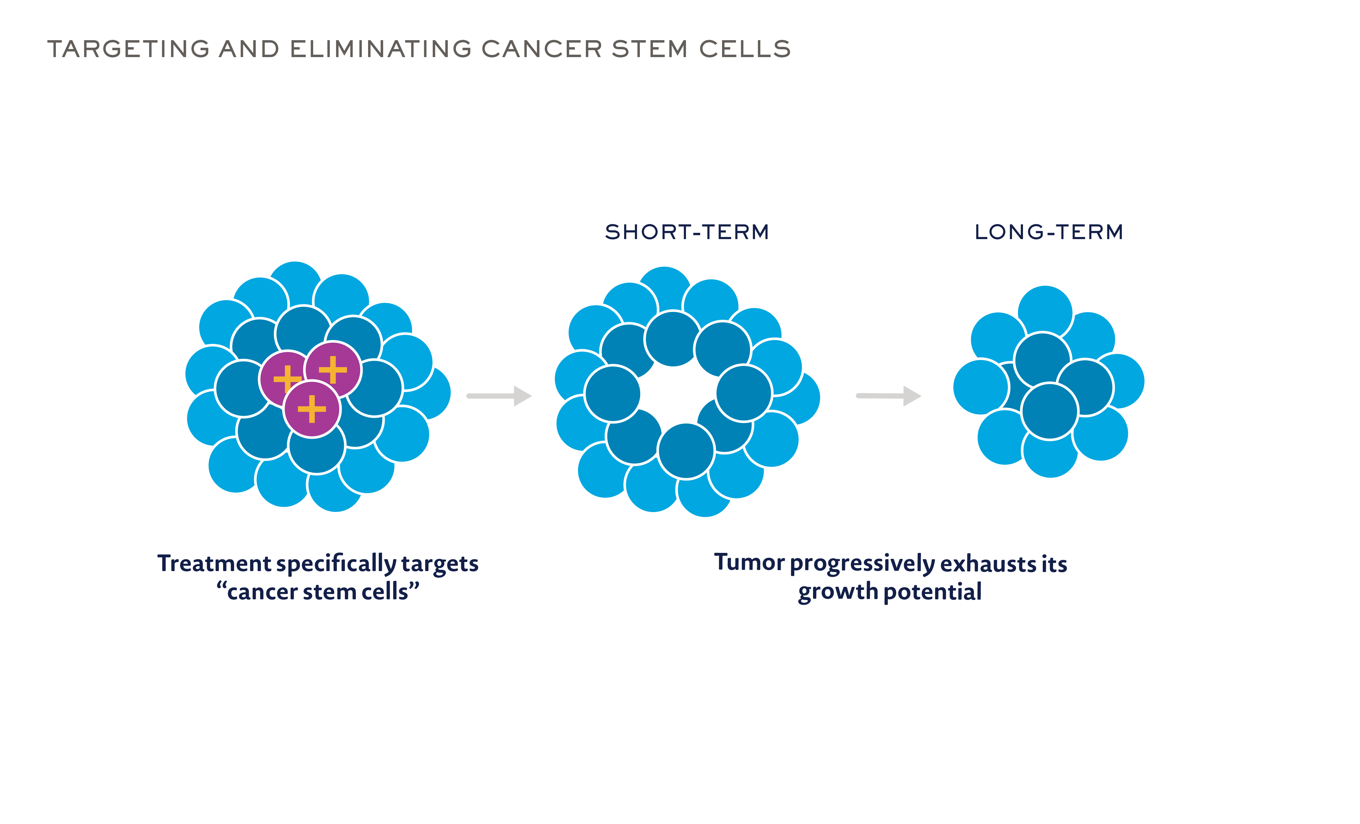 | Signaling pathways and breast cancer stem cell-targeted
